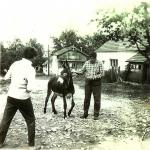 Jakub Marada s oslem